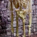 Squelette faux fini
