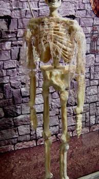 squelette-apres