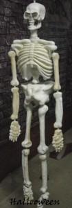 squelette-avant